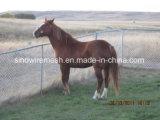 Rete fissa di collegamento Chain di Sailin per l'azienda agricola del cavallo