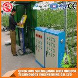 China-Stahlrahmen-Polycarbonat-Blatt-Gewächshaus 2017