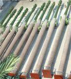 A venda quente simulou árvores de coco curvadas