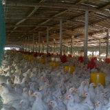 Het methionine-Zink van de Rang van het Dierenvoer Chelaat