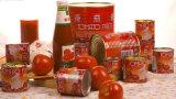 Linha de produção do atolamento do tomate