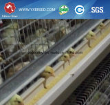 Gaiola de bateria nova da grelha da galinha das aves domésticas do projeto da casa da exploração agrícola