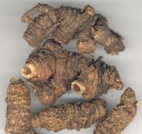Poudre incisée de rhizome de Notoptetygium ou d'extrait de fond