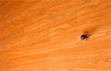 Perfumado Bubinga Real Wood Floor