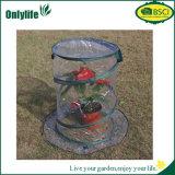 Serra pieghevole impermeabile del PVC di Usued del giardino mini