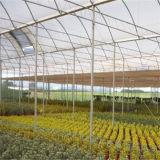 Самая лучшая фабрика продавая полиэтиленовую пленку Greenouse коммерчески Multi-Пяди для Vegetable растущий