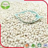 Chinesische mittlere weiße weiße Bohnen 200-220PCS/100g