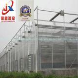 Invernadero de cristal con la estructura de acero galvanizada en baño caliente para Growing de flor