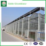 Agricultura/estufa de vidro comercial do passatempo com sistema de ventilação