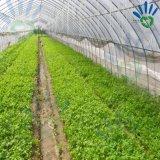 플랜트 덮개와 과일 보호 부대를 위한 농업 PP Spunbond 짠것이 아닌 직물