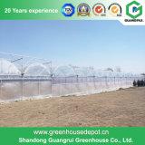 Serre chaude galvanisée à chaud de plastique de bâti en acier de la Chine