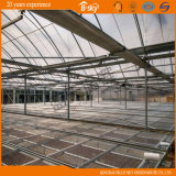 F-Clean Multi-Span Film Greenhouse com Glass Wall para Seeding