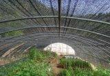 Réseau d'ombre pour l'agriculture