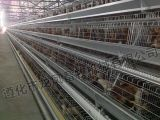 De hete Verkoop Gegalvaniseerde Kooi van de Kip in Afrika