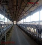 De Ventilator van de Uitlaat van Cowhouse met Redelijke Prijzen