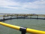 湖の川または海洋の栽培漁業の使用のための浮遊HDPEのケージ