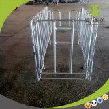 Клети беременность оборудования фермы свиньи Qingdao Deba подгонянные для сбывания