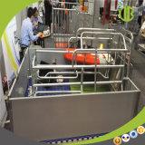 養豚場のための最新のアセンブルされたブタの生む木枠のブタ繁殖装置