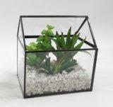 Succulent conservato in vaso moderno del metallo miniatura artificiale del Terrarium