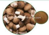 10:1 puro dell'estratto del fungo di Shiitake, 20:1, polisaccaride 10%-30%