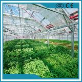 高品質のパソコンシートの野菜の温室