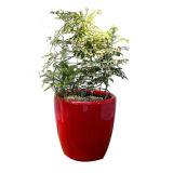 Potes de plantas coloridas Potes de flores ao ar livre decorativos