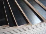 Contraplacado Eucalyptus / Birch Combi para construção civil
