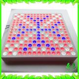 Панель Glebe растет светлая серия, завод 45W СИД растет светлой с красным голубым спектром для расти Flowering