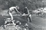 Acoplamiento de alambre de Sailin para el cercado de las aves de corral