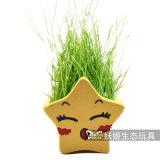 Regalos Potted de los amantes de las plantas de la estrella afortunada de la decoración del hogar de la oficina de la manera de la fuente de la fábrica