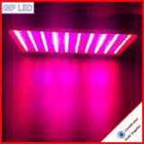 300W 600W 900W 1200W LED는 빛을 중국제 증가한다