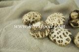Овощ волшебных грибов белого цветка высушенный