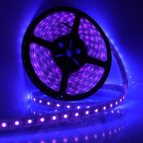 Luces ULTRAVIOLETA de la tira LED el ultravioleta 395nm 5050 SMD Blacklight del LED