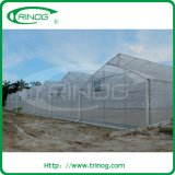 Moderner Hydroponics Brokkoli Greenhouse für Sale