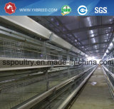 La volaille de batterie de l'Inde mettent en cage de 90/96/120/160 capacité d'oiseaux