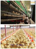 Structure d'acciaio in Poultry House su Un Stop Service 2016