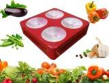 La PANNOCCHIA 300W LED di alto potere 4 si sviluppa colore rosso-chiaro e blu per la crescita dell'interno