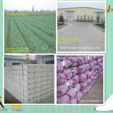 Aglio bianco fresco di nuova qualità della Cina