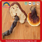Estratto di erbe naturale anticancro del fungo di Reishi dell'alimento salutare anticancro dell'alimento salutare, Ganoderma lucido, Ganoderma