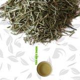 Que彼女中国の針の緑茶