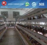 As aves domésticas da gaiola da camada da galinha mergulham o sistema da gaiola da camada da bateria da gaiola