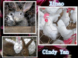 Reticolato Hex per il collegare ed il coniglio di pollo