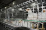 가축 농장 (유형)를 위한 자동적인 장비 시스템을%s 가진 보일러 닭 감금소