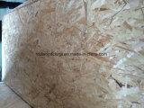 Classe quente OSB da mobília/construção/embalagem com colagem Phenolic ou da melamina