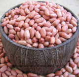 Los mejores núcleos sin procesar del cacahuete de Qualtiy de la nueva cosecha
