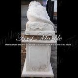 Leone di marmo di Metrix Carrara per la decorazione Ma-1000 del giardino
