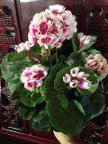 Migliori fiori artificiali di vendita dell'orchidea Gu-811-19-8-3