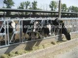 Горячий окунутый гальванизированный Headlock системы Собственн-Замка коровы для сбывания