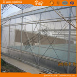 Multi-Span Film bonito Greenhouse para Seeding
