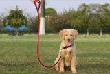 قابل للتعديل نيلون مادة يزركش ثقيلة - واجب رسم كلب تدريب يمشي طوي رباط